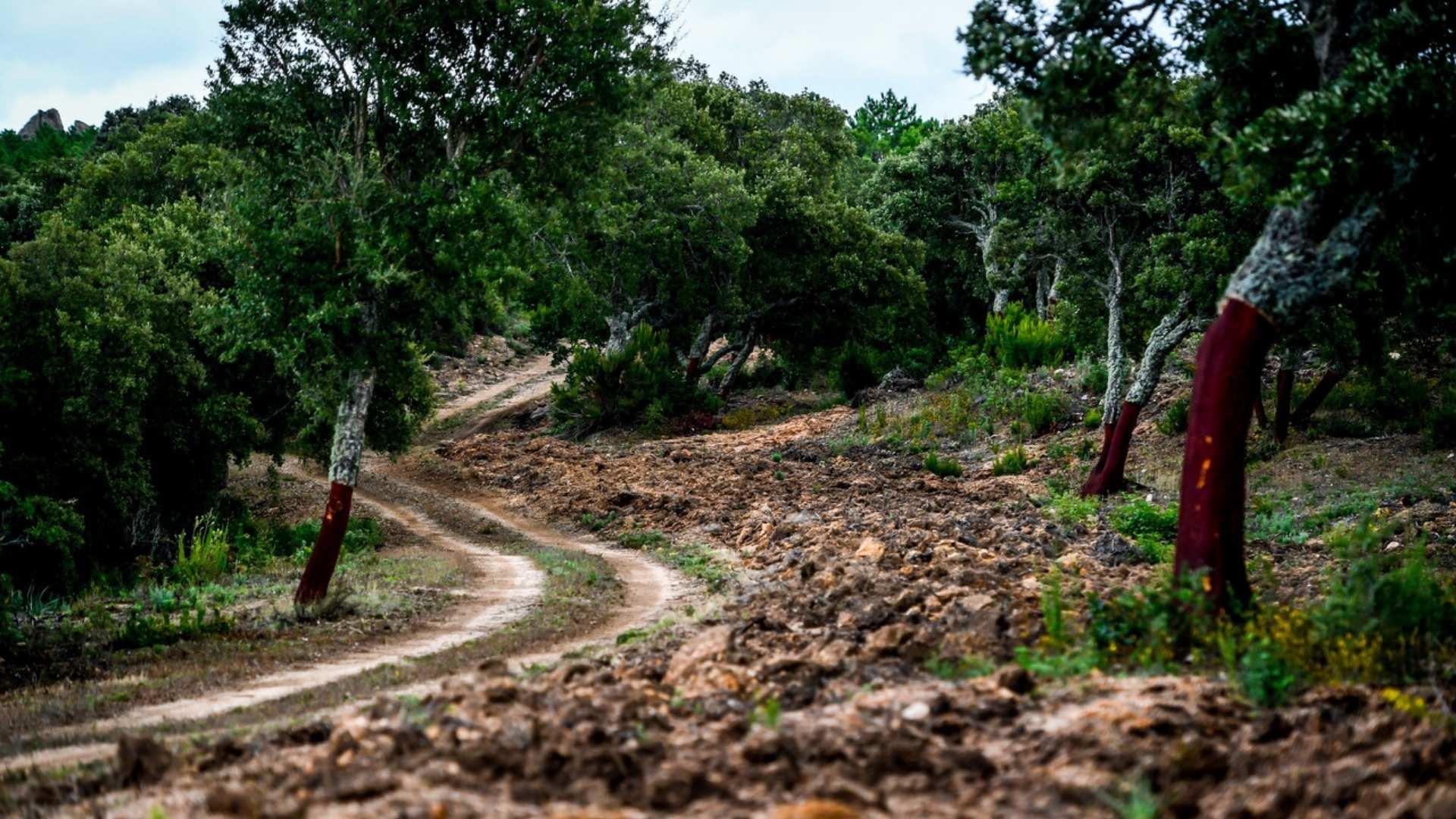 WRC: Rally d' Italia - Sardegna [8-10 Octubre] - Página 2 081020_Recce_Shot