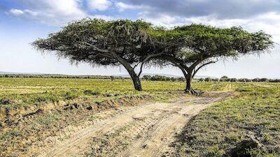 Preview – Safari Rally Kenya